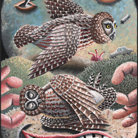 Morgan Bulkeley'swork, Book: Saw-whet Owl Mask